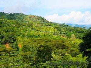 Colombie Jardin