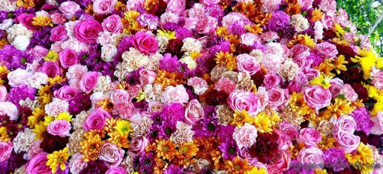 Medellin et Guatapé fêtent en grand les fleurs et les orchidées
